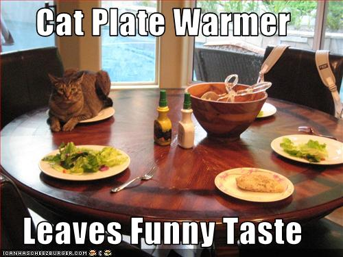 funny-pictures-cat-warms-plate
