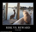 funny-pictures-cat-watches-bird