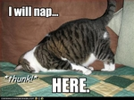 funny-pictures-cat-will-nap-here