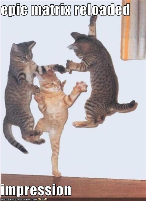 funny-pictures-cats-do-matrix-impression