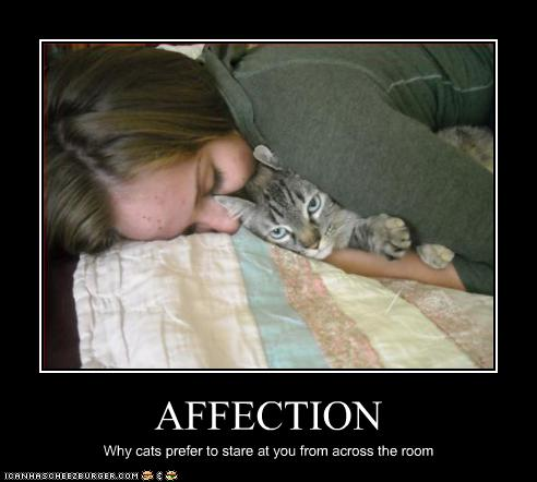 funny-pictures-cats-hate-affection