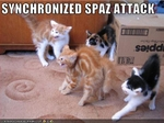 funny-pictures-cats-have-a-spaz-attack
