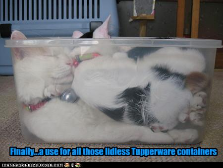 funny-pictures-cats-sleep-in-tupperware