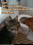 funny-pictures-cats-throw-up