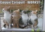 funny-pictures-cats-watch-dog-catapult
