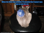 funny-pictures-fleas-install-sattelite-tv