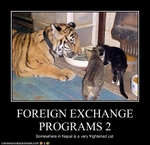 funny-pictures-foreign-exchange-programs