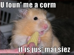 funny-pictures-hamster-has-small-corn