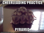 funny-pictures-hamsters-have-cheerleading-practice
