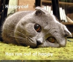 funny-pictures-happycat-is-sad1