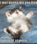 funny-pictures-kitten-fell-asleep-before-hug