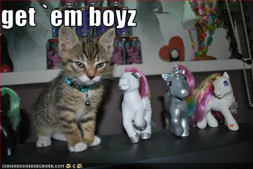 funny-pictures-kitten-has-pony-army