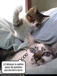 funny-pictures-kitten-is-about-to-attack
