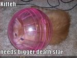 funny-pictures-kitten-needs-bigger-death-star