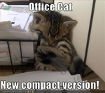 funny-pictures-kitten-sleeps-in-office
