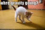 funny-pictures-kitten-wonders-where-gravity-went