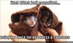funny-pictures-kittens-are-jedis