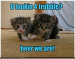 funny-pictures-kittens-are-trouble