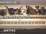 funny-pictures-kittens-play-piano