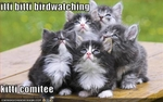 funny-pictures-kittens-watch-birds