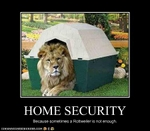funny-pictures-lion-secures-your-home