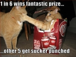 funny-pictures-one-cat-gets-punched