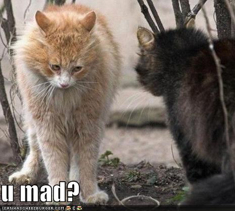 funny-pictures-one-cat-is-mad