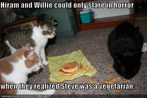 funny-pictures-one-cat-is-vegetarian