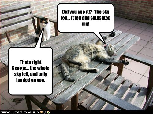 funny-pictures-sky-fell-on-cat