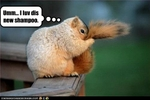 funny-pictures-squirrel-loves-new-shampoo