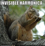 funny-pictures-squirrel-plays-invisible-harmonica