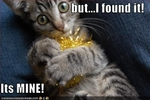 funny-pictures-tinsel-belongs-to-cat