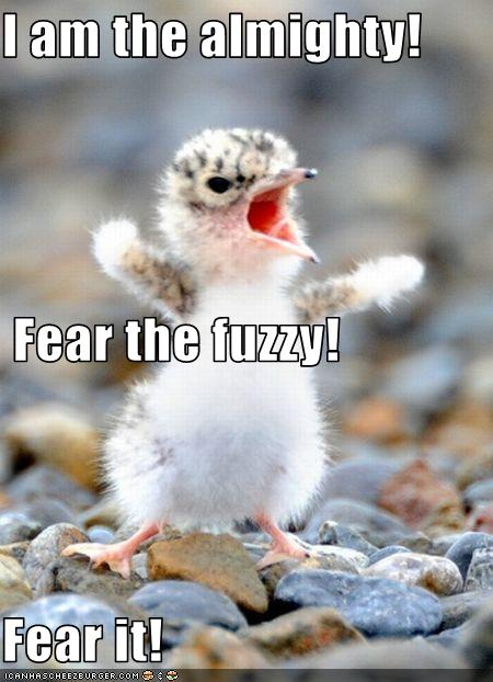 funny-pictures-tiny-bird-is-fierce