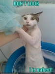 funny-pictures-your-cat-is-naked