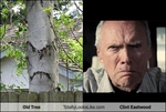 old-tree-totally-looks-like-clint-eastwood