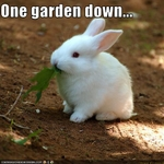 funny-pictures-bunny-eats-gardens