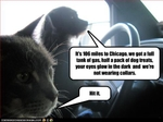 funny-pictures-cat-and-dog-do-roadtrip