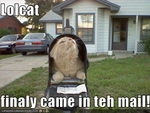 funny-pictures-cat-came-in-mail