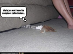 funny-pictures-cat-completes-collection