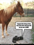 funny-pictures-cat-confuses-horse-with-cow