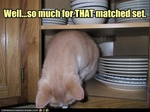 funny-pictures-cat-destroys-dishes