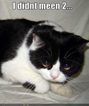 funny-pictures-cat-did-not-mean-to