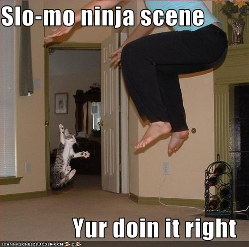 funny-pictures-cat-does-ninja-scene