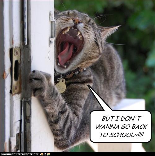 funny-pictures-cat-does-not-want-school
