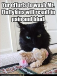 funny-pictures-cat-does-not-want-toy-washed