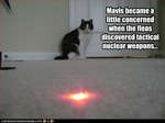 funny-pictures-cat-fears-laser