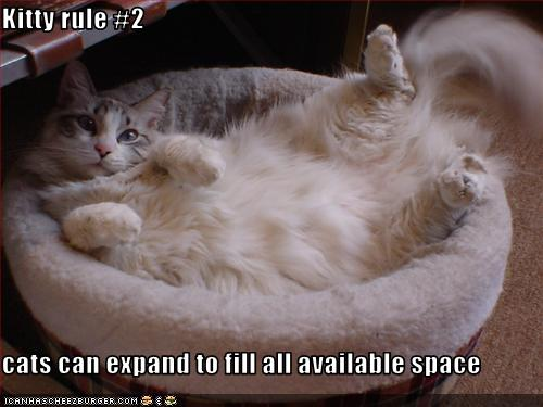 funny-pictures-cat-fills-space