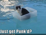 funny-pictures-cat-floats-in-pool