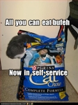 funny-pictures-cat-goes-to-buffet