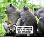 funny-pictures-cat-hates-monkeys